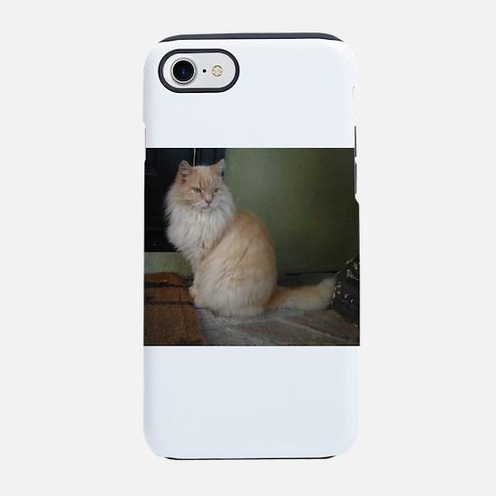 red tip persian cat sitting iPhone 8/7 Tough Case
