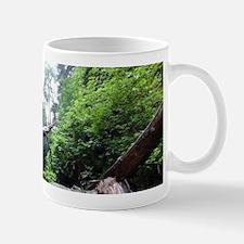 Dancing Fern Canyon Mugs