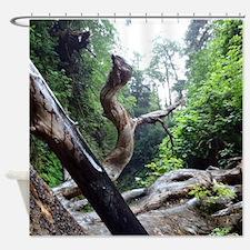 Dancing Fern Canyon Shower Curtain