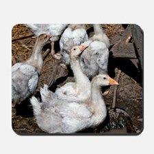 Molting Geese Mousepad