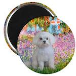 Garden / Maltese Magnet