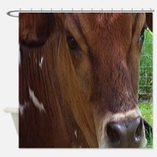Prize Steer Shower Curtain