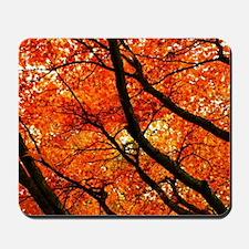 Autumn oak Mousepad