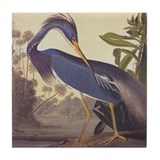 Audubon birds Drink Coasters