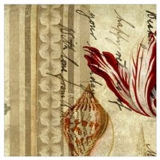 seashells tulip french botanical  Poster