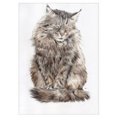 Maine Coon snoozing Poster