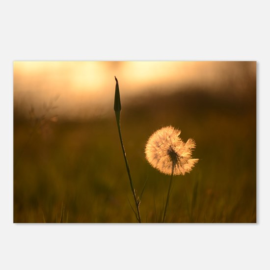 Dream Flower Postcards (Package of 8)
