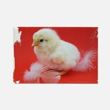 chicks in red Rectangle Magnet