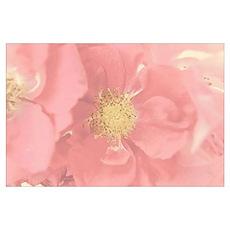 Bush Roses Mono Poster