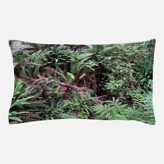 Redwood Rainforest Ferns Pillow Case