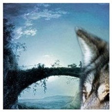 romantic moonlight wild wolf Poster