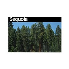 Sequoia NP Rectangle Magnet