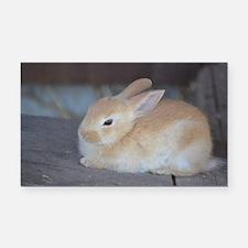 Unique Rabbit Rectangle Car Magnet
