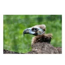 Funny Vulture Postcards (Package of 8)