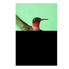 Ruby-Throated Hummingbird Postcards (Package of 8)
