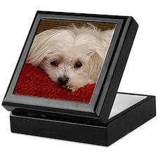 Cute Maltese Keepsake Box