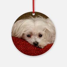 Cute Maltese Ornament (Round)