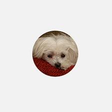 Cute Maltese Mini Button (100 pack)