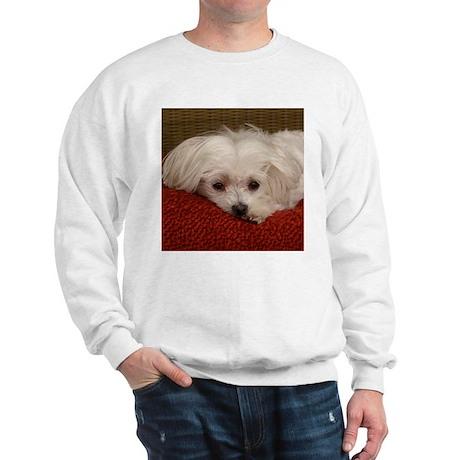 Cute Maltese Sweatshirt