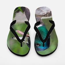 Mallard Duck Flip Flops