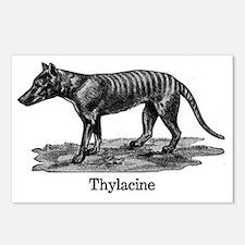 Thylacine 2 Postcards (Package of 8)
