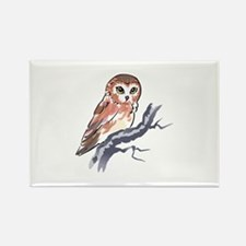 SAW WHET OWL Magnets