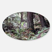 Redwoods Rainforest Decal