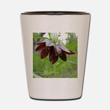 Chocolate Lily Shot Glass
