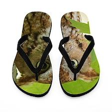Red Sreech Owl Flip Flops