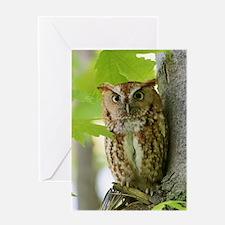 Red Sreech Owl Greeting Card