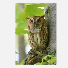 Red Sreech Owl Postcards (Package of 8)