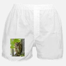 Red Sreech Owl Boxer Shorts