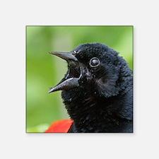 "Red-Winged Blackbird Square Sticker 3"" x 3"""