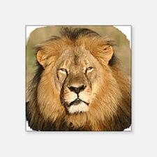 """Cecil the Lion Square Sticker 3"""" x 3"""""""