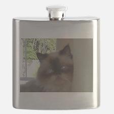 seal point himalayan Flask