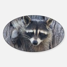 Raccoon in a Tree Decal