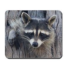 Raccoon in a Tree Mousepad