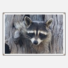 Raccoon in a Tree Banner