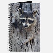 Raccoon in a Tree Journal