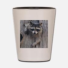 Raccoon in a Tree Shot Glass