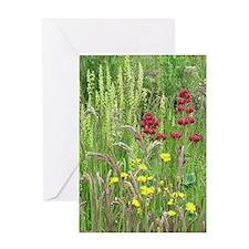Spring Wild Grass Greeting Cards