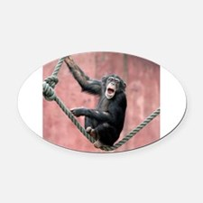 Chimpanzee001 Oval Car Magnet
