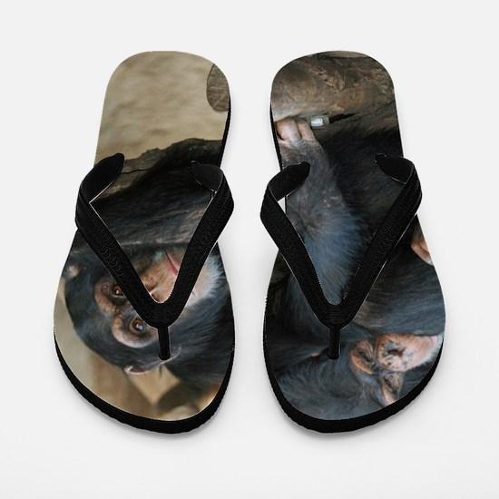 Chimpanzee006 Flip Flops