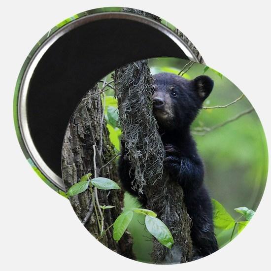 Black Bear Cub Magnet