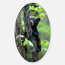 Black Bear Cub Sticker (Oval)