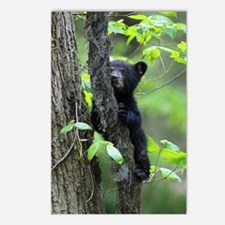 Black Bear Cub Postcards (Package of 8)