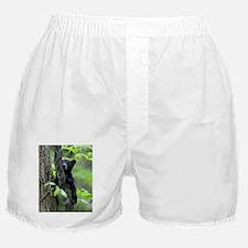 Black Bear Cub Boxer Shorts