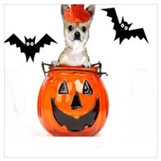 Halloween Chihuahua dog Poster