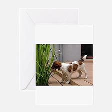 kooikerhondje puppy full Greeting Cards