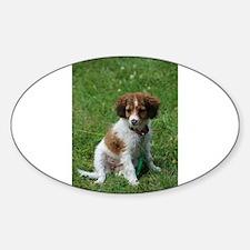 kooikerhondje puppy wet Decal